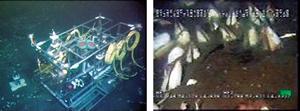 相模湾初島沖海底観測ステーションと設置したカメラによるシロウリガイ観察の映像