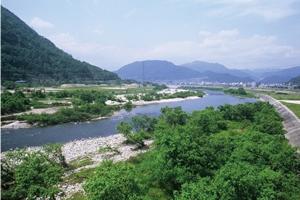 河川への有機炭素供給源である河畔植生